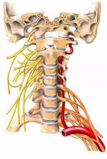 nervi cervicale