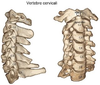 vertebre cervicali